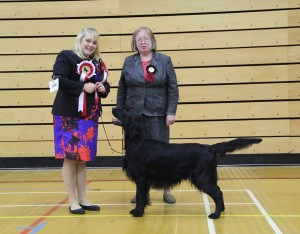 Best in Show and DCC Holland's Sh Ch Brightmoor Caught in the Act at Flatcharm (Imp)