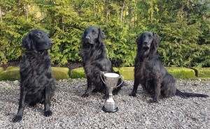 This Year Three of Wendy Battison's dogs were in the top three places competing for Ceilidh Cup Winner