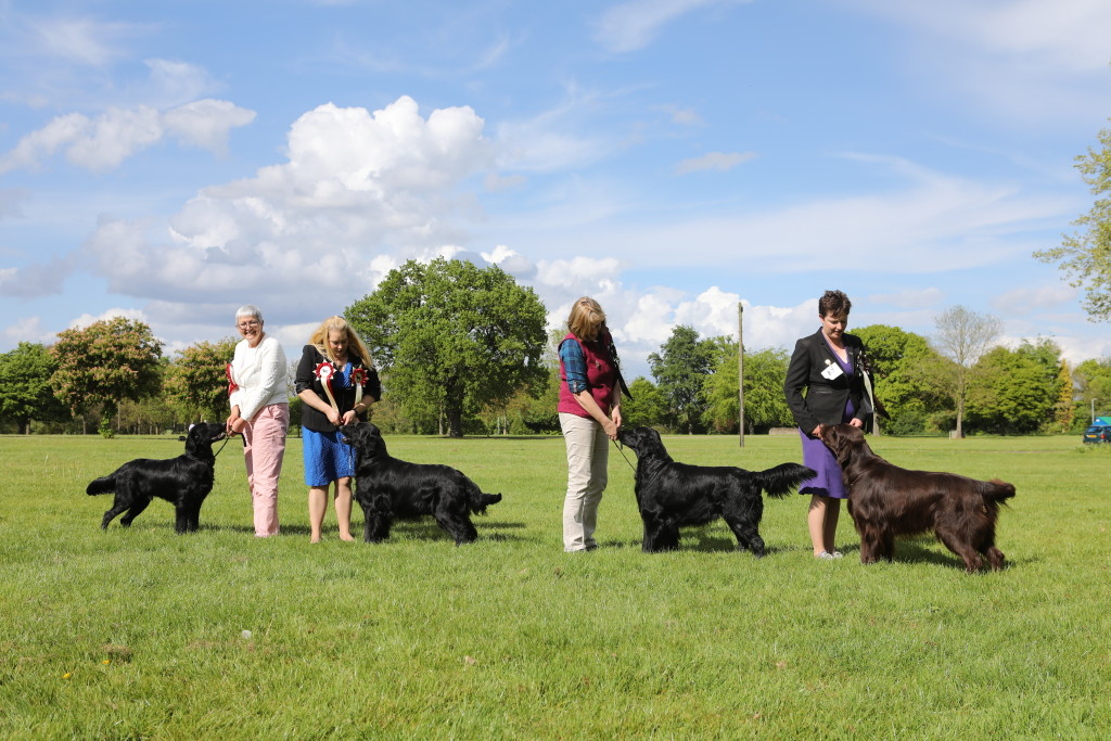 BEST PUPPY DOG MALONE'S KIRKBECK THE MAN IN BLACK BEST DOG & CC HOLLAND'S CH CALZEAT CAUSA COMMOTION AT FLATCHARM (IMP) RESERVE BEST DOG & RES CC LAIRD'S SH CH BRANCHALWOOD TAMDHU OF DAICHEIL JW ShCM BEST LIVER IN SHOW JACOBS & HOLMES' CHARMING MELVIN OASIS OF PEACE (IMP CZ) JW