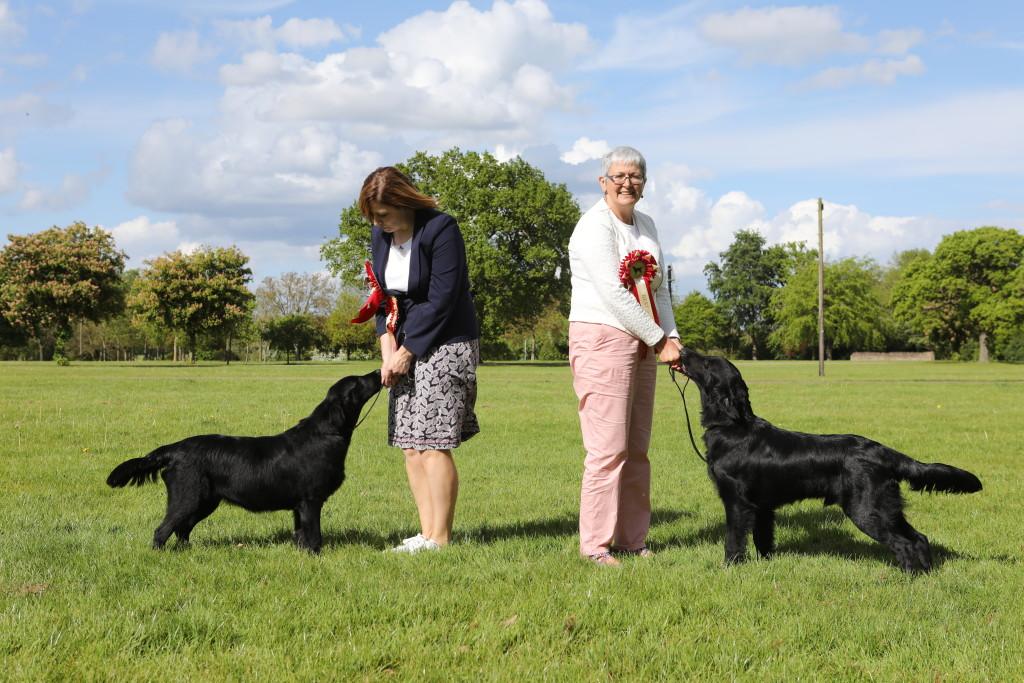 BEST PUPPY DOG MALONE'S KIRKBECK THE MAN IN BLACK BEST PUPPY BITCH WALKER & ROBERTS' JADE VOM WILDFORSTERSEE AT GLOI (IMP DEU)