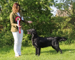 Best Puppy In Show Smitherman & Roberts' Seaheart Crain at Gloi
